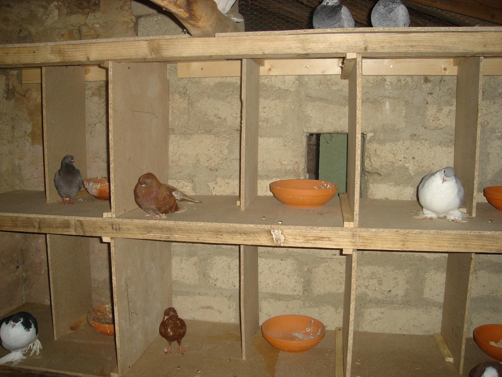 Poules et compagnie mes articles for Amenagement d un poulailler